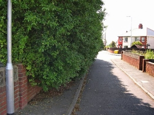 Trees and high hedges