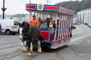 2014 horse tram figures show increase over 2013