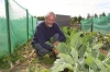 Growth industry: Council allotment holders reaping the benefits