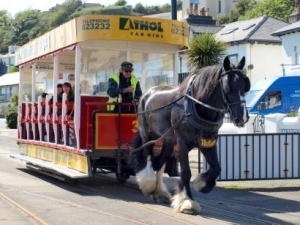 Council clarifies 2015 horse tram service performance figures